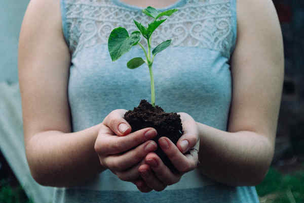 芽が出た苗を持つ女性