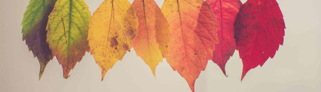 色の違う7枚の葉っぱ