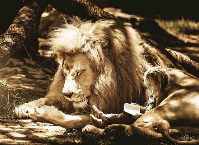 ライオンと本を読む少女