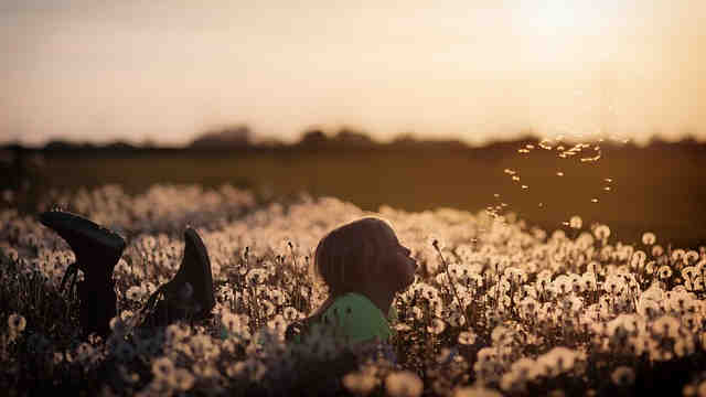 タンポポの綿毛を飛ばしている女の子