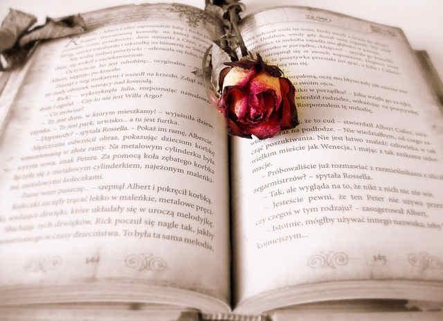 本とバラのドライフラワー