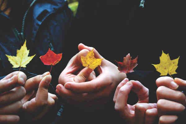 5人が持つそれぞれの色の紅葉
