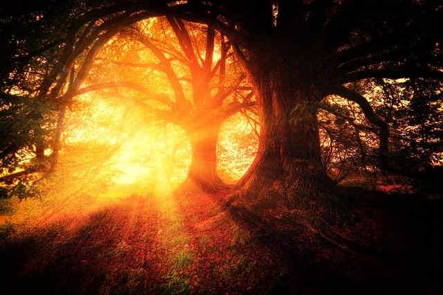 幻想的な森の中