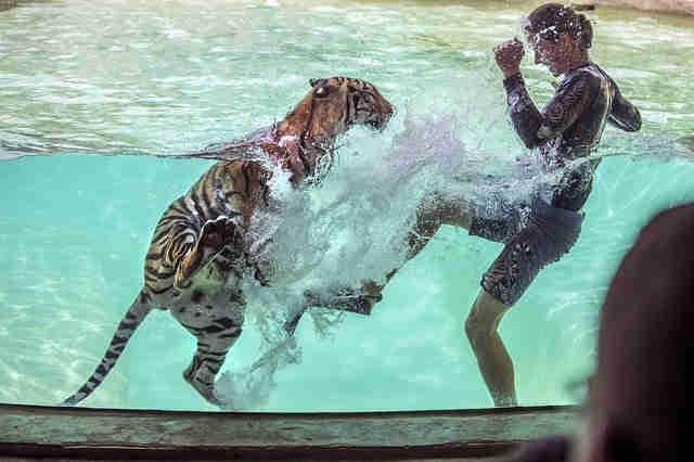 動物訓練士
